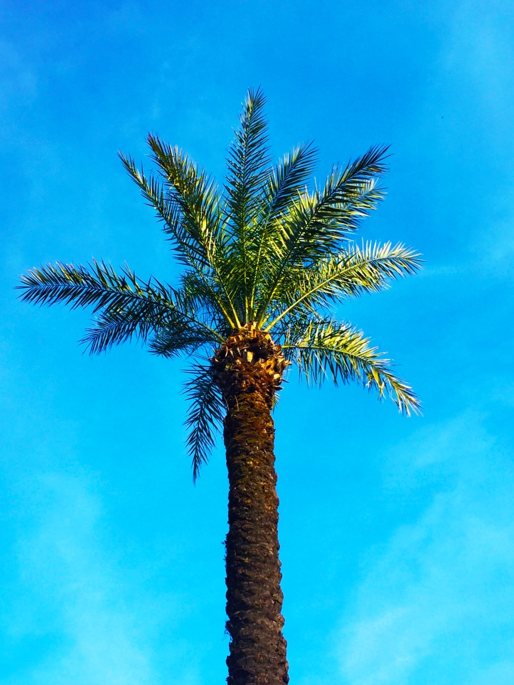 palm tree , photography, blue sky